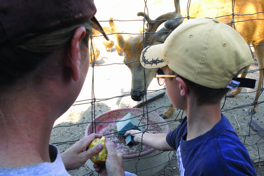 Junior Zookeeper Day Camp returns to Wildlife West Nature Park