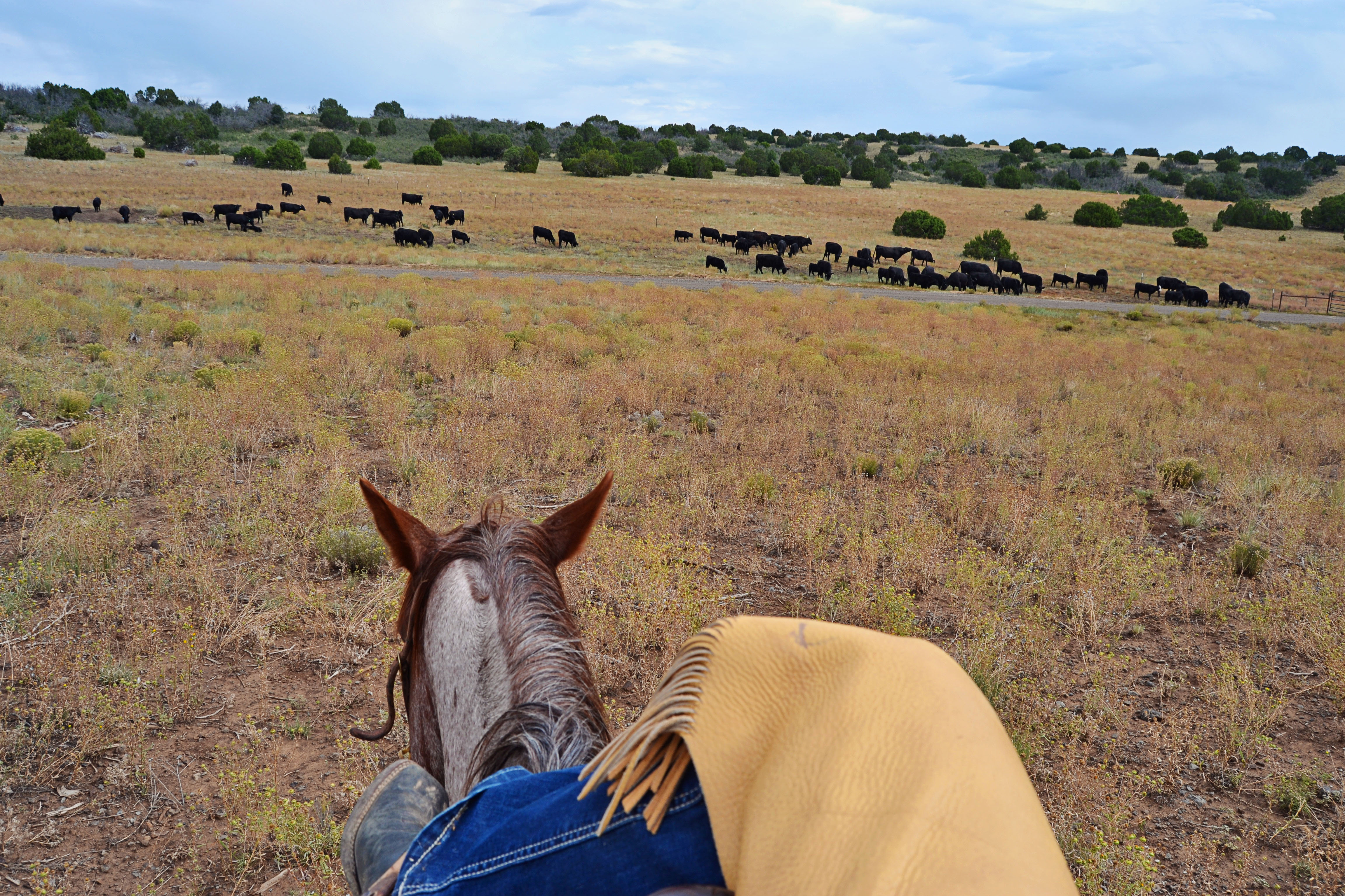 cowgirl sass holding herd