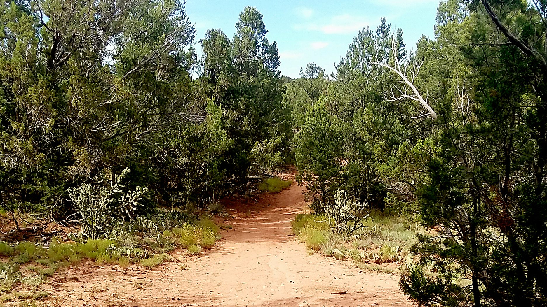 Public input invited for Cibola management plan