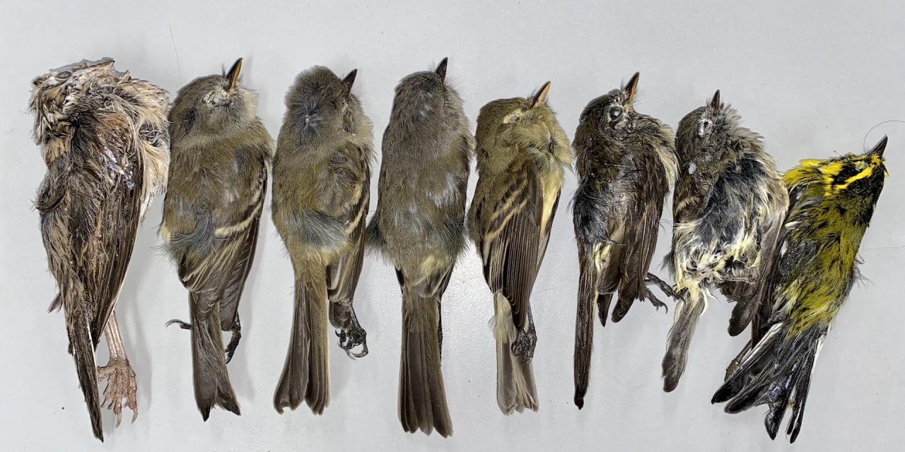 Scientists: Mass bird deaths likely related to cold