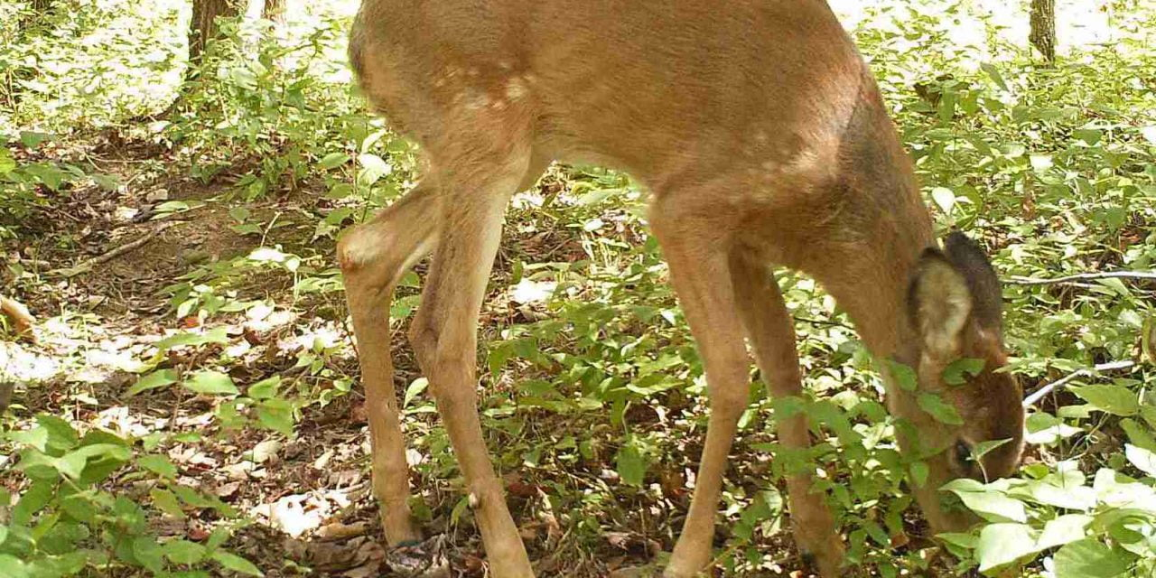 Wild Things: A Fawn's Unsuccessful Rescue Story