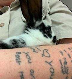 Runaway rabbits end up at local shelters