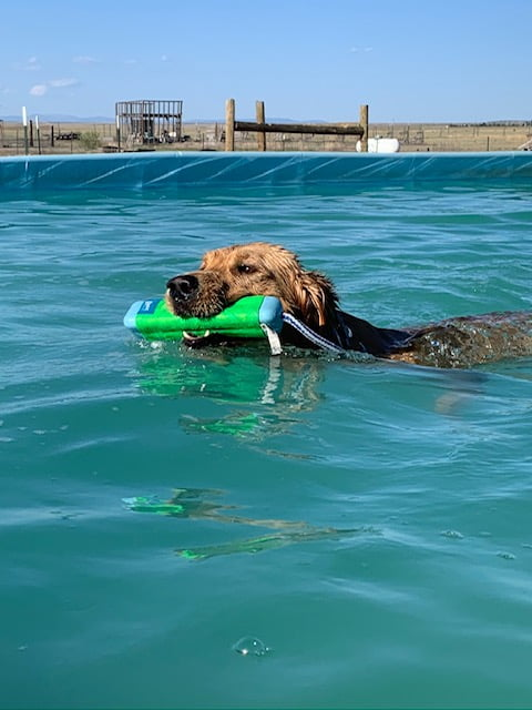Stanley dog pool and training center hosts competitions